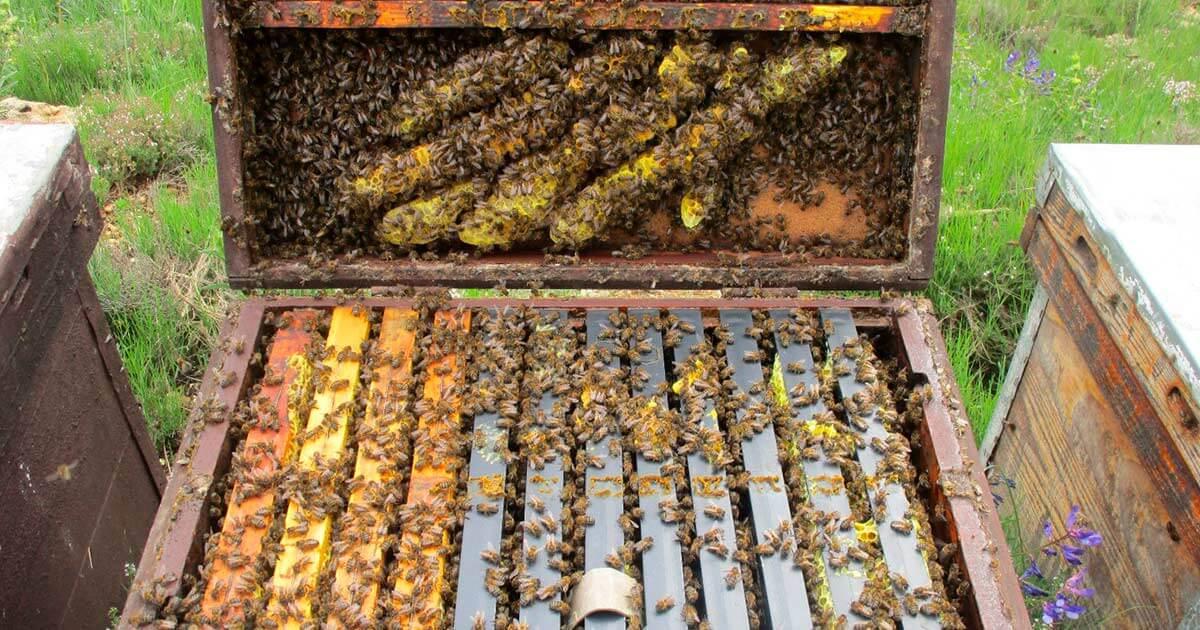 ¿Cómo transportar colmenas de abejas a distancias cortas?